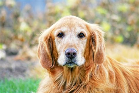 extend for dogs researchers testing that might extend dogs lives by 15 percent dr marty becker