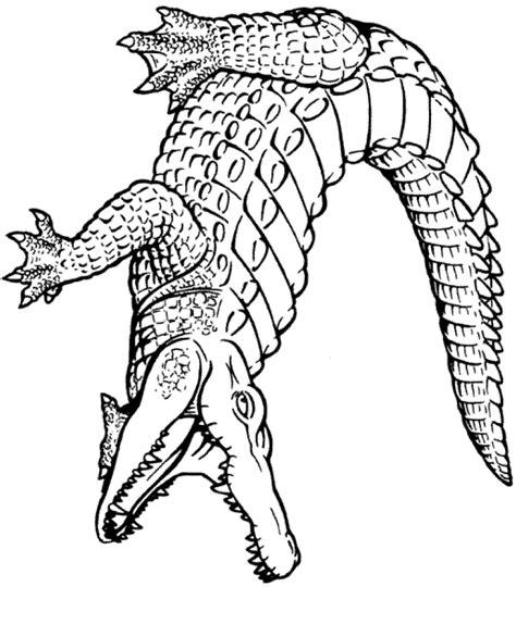 Crocodile Image Outline by Clip Alligator Cliparts Co