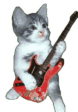 animals  guitar funny animated gifs hard guitar guitar lessons   play guitar