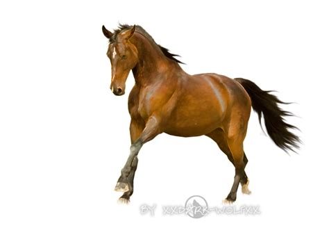 For Horses stock finish by wolfs stock on deviantart