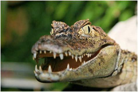zoologischer garten berlin krokodile hauptstadt zoo aquarium not human