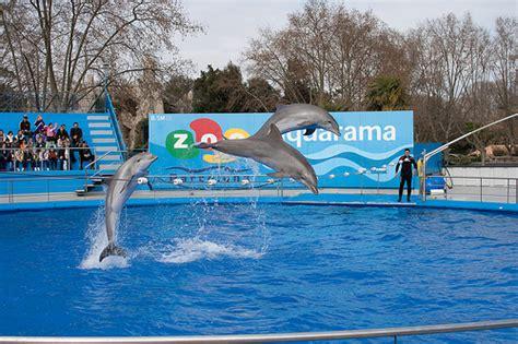 fotos animales zoo barcelona visitar el zoo de barcelona turismo barcelona