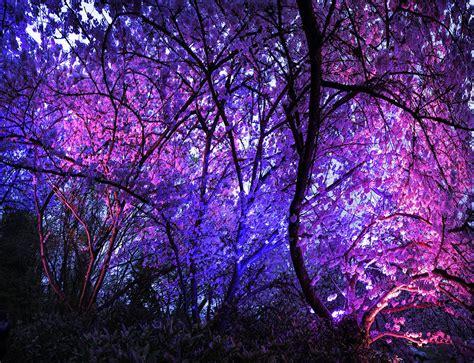 cherry blossom festival jim cox photos cherry blossom festival