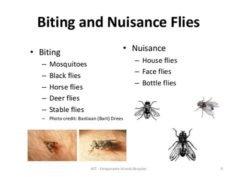 do house flies bite ectoparasites