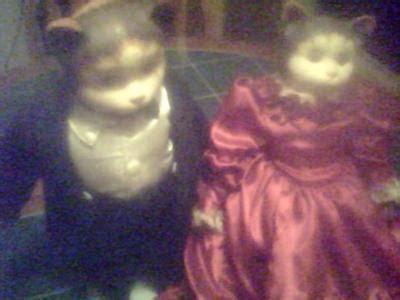 bisque cat doll antique bisque dolls cats