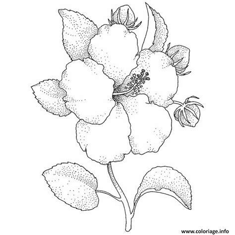 Coloriage Fleur Hibiscus Dessin Coloriage Fleur De Vanille Imprimer L
