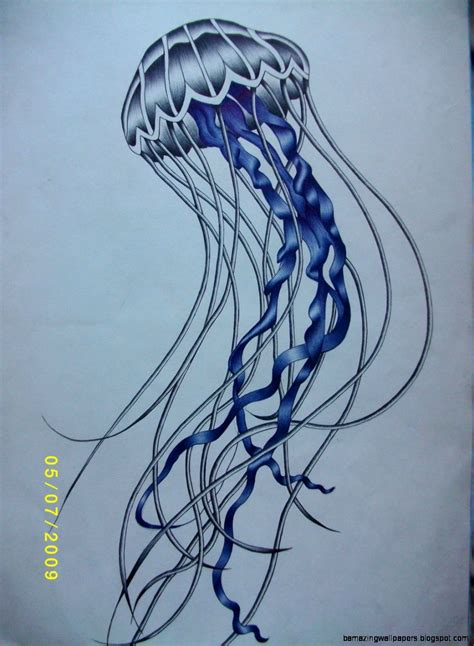 Drawing Jellyfish by Cool Jellyfish Drawing Amazing Wallpapers