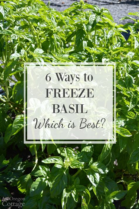 freezing basil leaves 6 ways which is best page 2 of 2