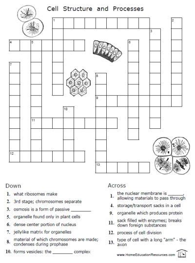 printable puzzles for middle school printable puzzles for middle school science middle