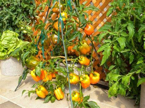 Arrosage Des Tomates Dans Le Sud by Potager De Balcon Votre Compl 233 Ment Sant 233 Bio