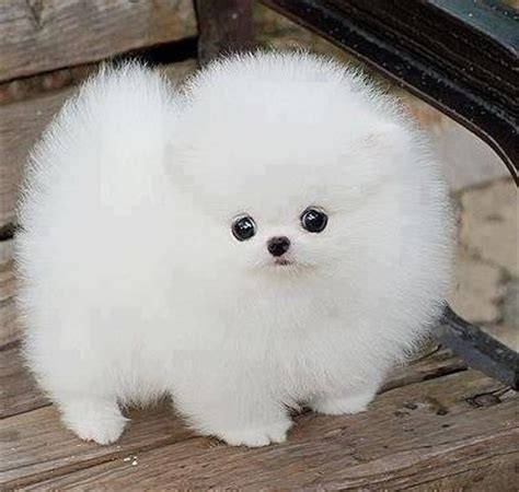 snowball puppy snowball dogs cats