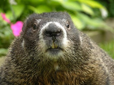 groundhog day like does tim hudak look like a groundhog the catastrophizer