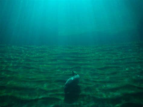 imagenes reales del fondo del mar por el fondo del mar fotos de concurso quot la foto del
