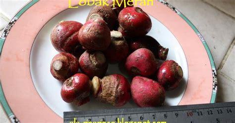 saya lobak merah radish