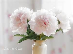pfingstrosen in der vase wei 223 e pfingstrosen in der vase
