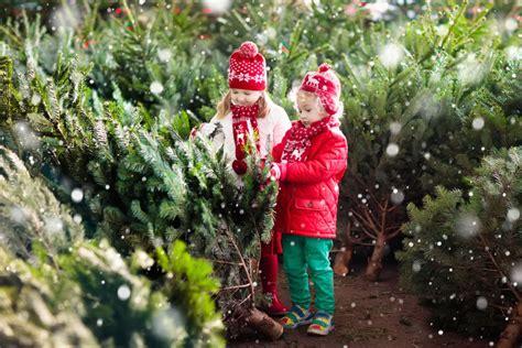 christmas tree farms portland bigeasydesign com