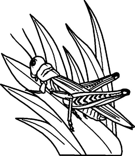 free coloring pages grass coloring pages of grass clipart best