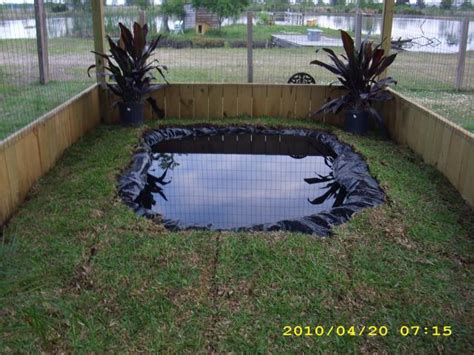 Backyard Duck Pond Ideas Duck Pond Pool Pictures Page 28