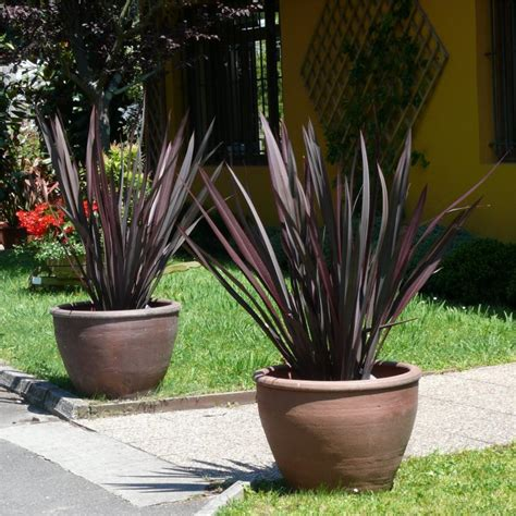 Beautiful Indoor Plants flax dark delight hello hello plants amp garden supplies
