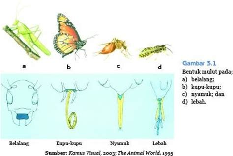 Cara Makhluk Hidup Melindungi Diri makhluk hidup pada ipa sd cara hewan menyesuaikan diri dengan lingkungannya