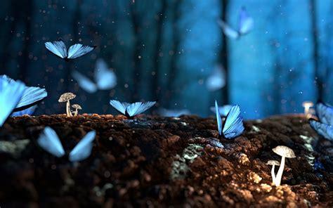blue shine night butterflies forest night wallpapers hd