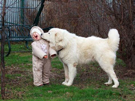 dogs with big 7 reasons every kid should grow up with large breed dogs