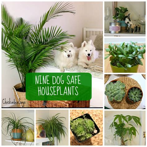 safe house plants for dogs 8 dog safe plants for a stylish home habits of a modern hippie