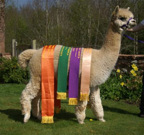 Epc This Is Anfield 2 alpacaseller integration