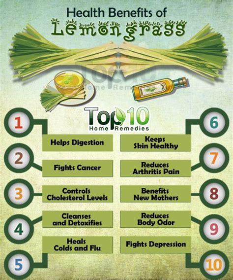 Detox After Surgery by Best 20 Lemon Grass Plant Ideas On