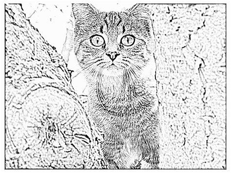 dessins de coloriage felins gratuit  imprimer