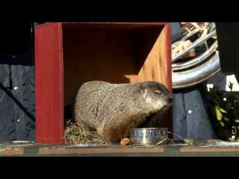 groundhog day turtle back zoo punxsutawney phil comes out of burrow to visit farm show
