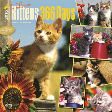 Cat Calendar 2018 Uk Kittens Calendars 2018 On Europosters