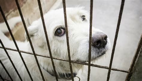 california puppy mill want california to ban the sale of puppy mill dogs in pet stores now s the time to
