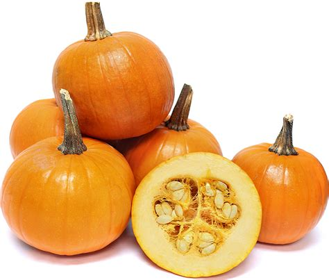 images of pumpkins for pam pumpkins information recipes and facts