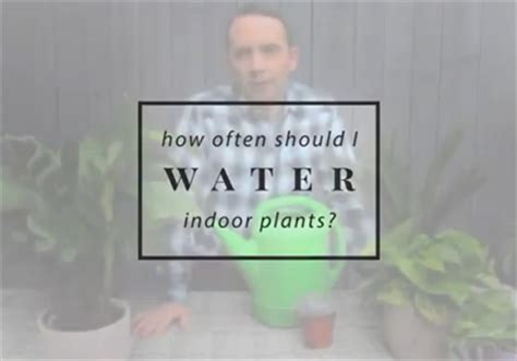 Most Popular Frankie Flowers Grow Eat Live Outdoors How Often Should I Water My Vegetable Garden