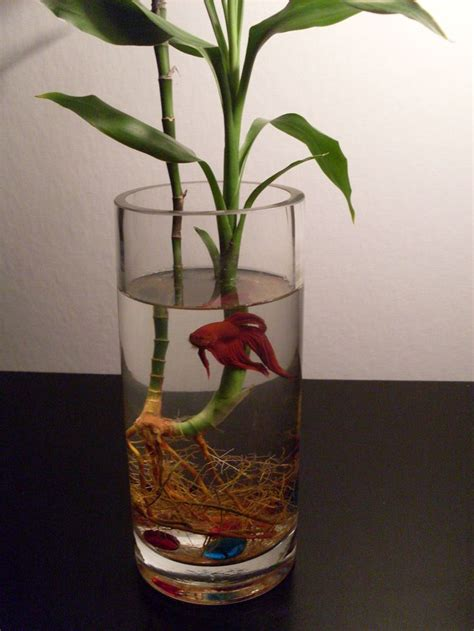 Betta Plant Vase by Beta Bamboo Pets Bowls Betta Fish And