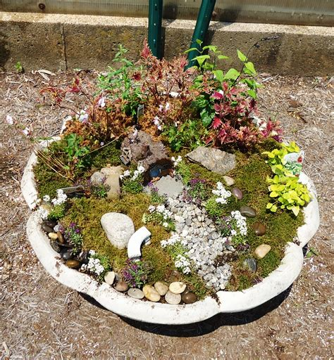 Mini Garden by Miniature Gardening Town And Country Nurseries