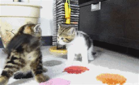 Cat Fight Meme - cat fight memes com