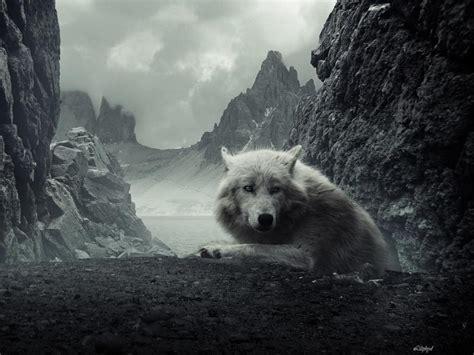 Lone Wolf lone wolf wallpaper 1080p www imgkid the image kid