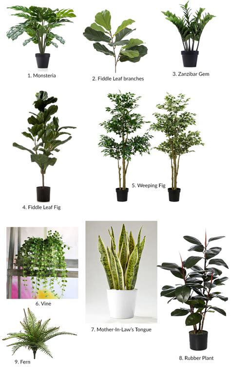 artificial plants   find katrina chambers