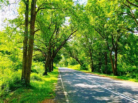 sri lanka nature road trees photography green