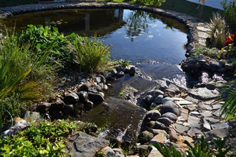 catfish backyard pond small backyard ponds to freshen your backyard the latest