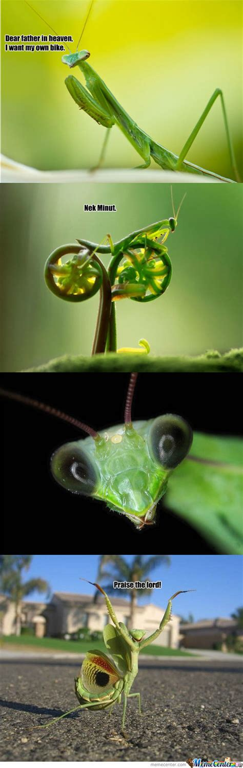 Mantis Meme - pray memes best collection of funny pray pictures