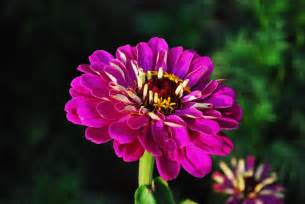 Garden Flowers In India Indian Photography Best Indian Garden Flowers Wallpapers