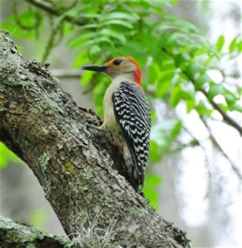 how to keep woodpeckers away from your gutters