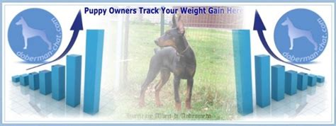 puppy weight gain doberman chat forum