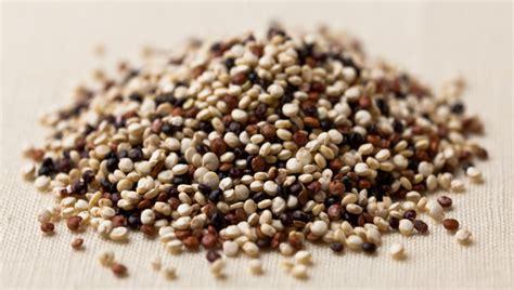 couscous vs quinoa couscous vs quinoa bodybuilding
