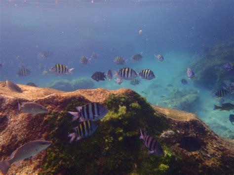 riesen hängematte mexiko reisebericht quot xel ha ein riesen aquarium quot