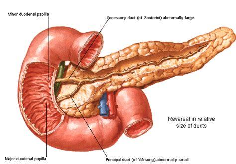 pancreatitis diagram birmingham news shining a light on the pancreas