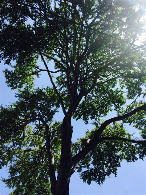 tree pictures tree service pictures san antonio tx san antonio tree surgeons